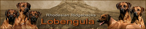 Родезийский риджбек, питомник риджбеков Лобенгула, щенок родезийского риджбека, Rhodesian ridgeback -   Lobengula, Москва